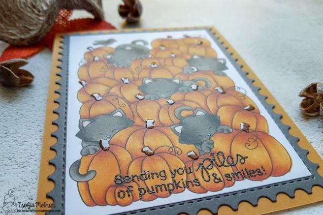 Newtons_pumpkin_patch_zsm02